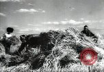Image of new harvest Turkmenistan, 1949, second 41 stock footage video 65675032367