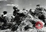 Image of new harvest Turkmenistan, 1949, second 43 stock footage video 65675032367