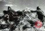 Image of new harvest Turkmenistan, 1949, second 44 stock footage video 65675032367