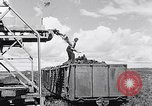 Image of Barty O'Brien Ireland, 1948, second 24 stock footage video 65675032542