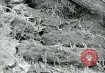 Image of drought United States USA, 1936, second 29 stock footage video 65675032593