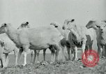 Image of drought United States USA, 1936, second 9 stock footage video 65675032594