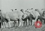 Image of drought United States USA, 1936, second 10 stock footage video 65675032594