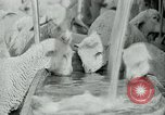 Image of drought United States USA, 1936, second 57 stock footage video 65675032594