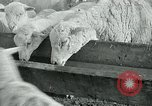 Image of drought United States USA, 1936, second 60 stock footage video 65675032594