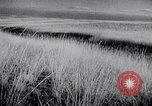 Image of The Dust Bowl United States USA, 1936, second 55 stock footage video 65675032604