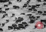 Image of The Dust Bowl United States USA, 1936, second 60 stock footage video 65675032604