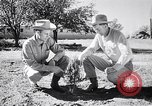 Image of American farmers Dalhart Texas USA, 1960, second 31 stock footage video 65675032610