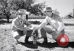 Image of American farmers Dalhart Texas USA, 1960, second 32 stock footage video 65675032610