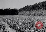 Image of American farmers Dalhart Texas USA, 1960, second 33 stock footage video 65675032610