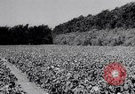Image of American farmers Dalhart Texas USA, 1960, second 35 stock footage video 65675032610