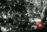 Image of Viet Cong digging trenches Vietnam, 1965, second 1 stock footage video 65675032687