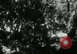 Image of Viet Cong digging trenches Vietnam, 1965, second 2 stock footage video 65675032687