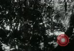 Image of Viet Cong digging trenches Vietnam, 1965, second 3 stock footage video 65675032687