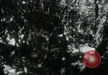 Image of Viet Cong digging trenches Vietnam, 1965, second 4 stock footage video 65675032687
