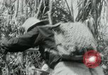 Image of Viet Cong moving supplies in Jungles on bicycles Vietnam, 1967, second 22 stock footage video 65675032692
