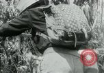 Image of Viet Cong moving supplies in Jungles on bicycles Vietnam, 1967, second 23 stock footage video 65675032692