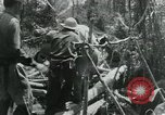 Image of Viet Cong moving supplies in Jungles on bicycles Vietnam, 1967, second 60 stock footage video 65675032692