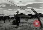 Image of Working activities on a farm and ranch in Texas United States USA, 1943, second 46 stock footage video 65675032776