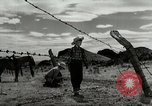 Image of Working activities on a farm and ranch in Texas United States USA, 1943, second 47 stock footage video 65675032776