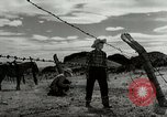 Image of Working activities on a farm and ranch in Texas United States USA, 1943, second 48 stock footage video 65675032776