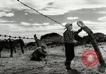 Image of Working activities on a farm and ranch in Texas United States USA, 1943, second 49 stock footage video 65675032776