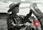 Image of Working activities on a farm and ranch in Texas United States USA, 1943, second 50 stock footage video 65675032776