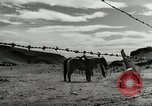 Image of Working activities on a farm and ranch in Texas United States USA, 1943, second 59 stock footage video 65675032776