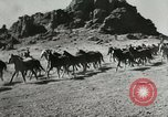 Image of Roundup of wild horses United States USA, 1943, second 3 stock footage video 65675032777