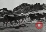 Image of Roundup of wild horses United States USA, 1943, second 5 stock footage video 65675032777