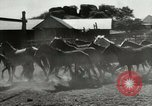 Image of Roundup of wild horses United States USA, 1943, second 7 stock footage video 65675032777