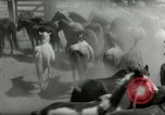 Image of Roundup of wild horses United States USA, 1943, second 11 stock footage video 65675032777