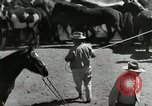Image of Roundup of wild horses United States USA, 1943, second 20 stock footage video 65675032777
