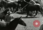 Image of Roundup of wild horses United States USA, 1943, second 21 stock footage video 65675032777