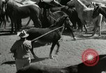 Image of Roundup of wild horses United States USA, 1943, second 22 stock footage video 65675032777