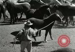 Image of Roundup of wild horses United States USA, 1943, second 23 stock footage video 65675032777