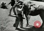 Image of Roundup of wild horses United States USA, 1943, second 24 stock footage video 65675032777