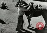 Image of Roundup of wild horses United States USA, 1943, second 25 stock footage video 65675032777