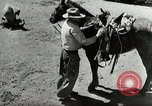 Image of Roundup of wild horses United States USA, 1943, second 26 stock footage video 65675032777