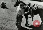 Image of Roundup of wild horses United States USA, 1943, second 27 stock footage video 65675032777