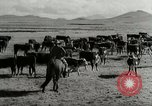 Image of Roundup of wild horses United States USA, 1943, second 47 stock footage video 65675032777