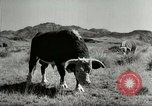 Image of Roundup of wild horses United States USA, 1943, second 60 stock footage video 65675032777
