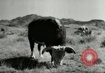 Image of Roundup of wild horses United States USA, 1943, second 62 stock footage video 65675032777