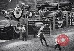 Image of rodeo Houston Texas USA, 1966, second 17 stock footage video 65675032846