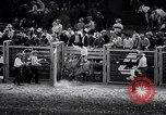 Image of rodeo Houston Texas USA, 1966, second 43 stock footage video 65675032846