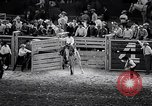 Image of rodeo Houston Texas USA, 1966, second 44 stock footage video 65675032846