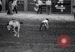 Image of rodeo Houston Texas USA, 1966, second 49 stock footage video 65675032846