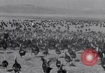 Image of turkey Westley California USA, 1933, second 20 stock footage video 65675032944