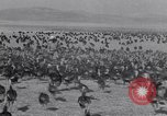 Image of turkey Westley California USA, 1933, second 21 stock footage video 65675032944
