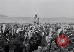 Image of turkey Westley California USA, 1933, second 25 stock footage video 65675032944